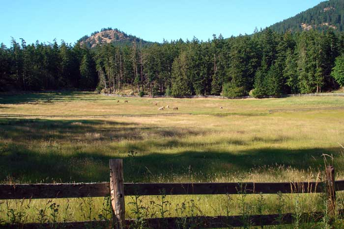 One of the many pastures available to horses boarded at Turtlehead Farm.